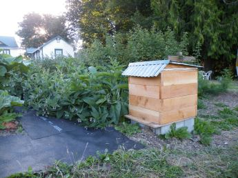 Perone bee Hive 2