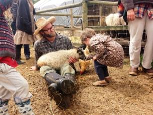 Petting lamb