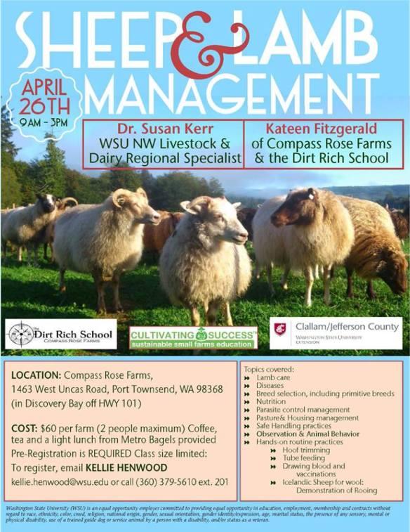 sheep workshop